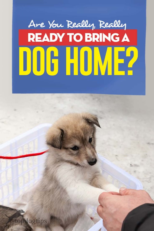 Are You Really Ready to Bring a Dog Home - My Best Tips