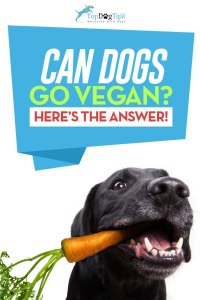 Can Dogs Go Vegan or Be Vegetarians