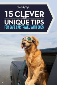 Clever Tips for Traveling with Dogs in Cars