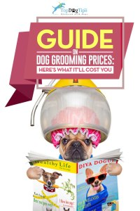 Comparing Dog Grooming Prices