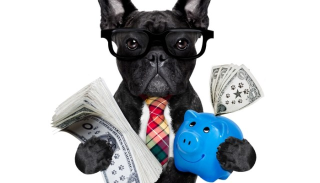 Dog Supplies Not Worth Cost
