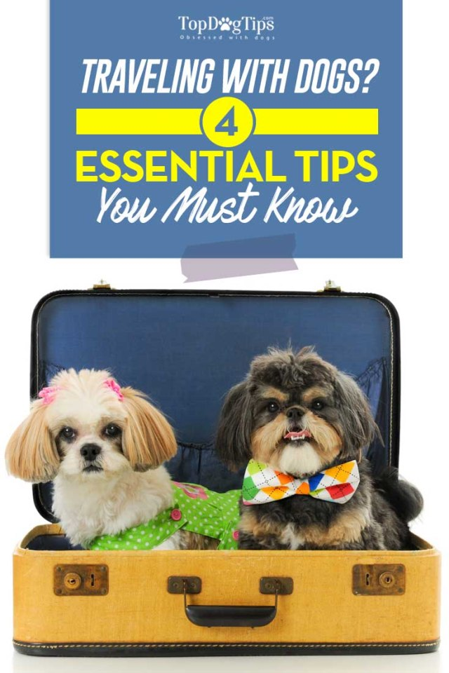 Essential Tips For Traveling With Dogs
