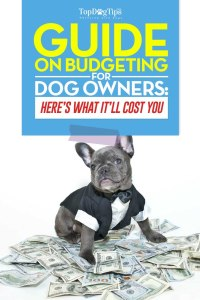 How Much Does a Dog Cost Guide
