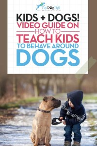 How To Teach Kids To Behave Around Dogs Video