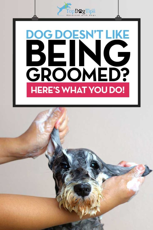 Tips on How To Train A Dog To Enjoy Grooming