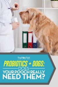 Top Best Probiotics For Dogs