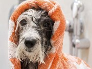 7 Best Dog Towel for Drying Dogs After Bathing