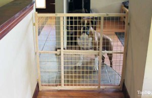 Evenflo Position and Lock Dog Gate Review