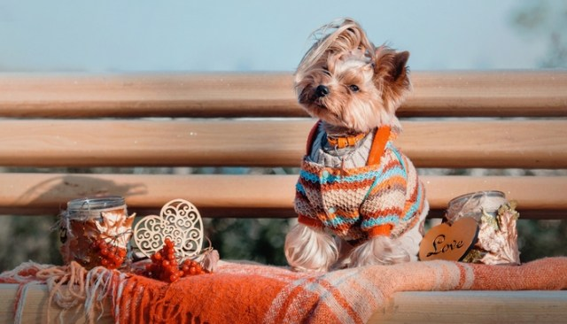 Best Dog Thanksgiving Clothes and Costumes