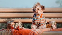16 Best Dog Thanksgiving Clothes and Costumes for the Holiday