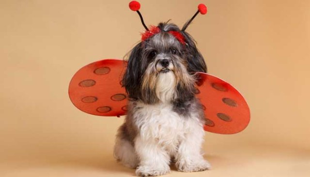 Cute Thanksgiving Dog Costumes