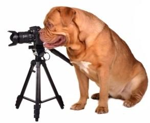 Dog Photography Tools