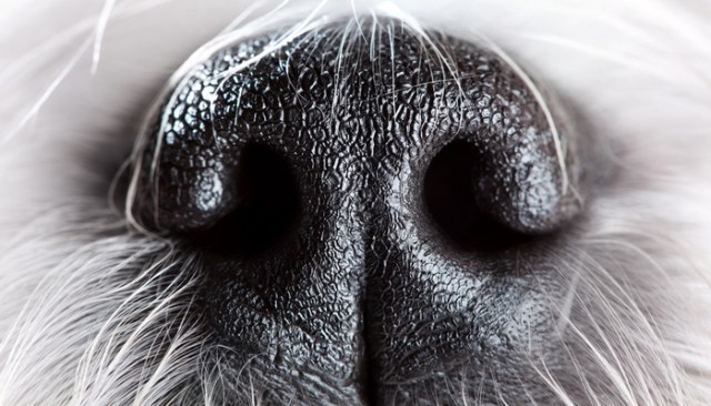 Dogs Can Smell Time