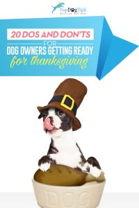 Thanksgiving with Dogs: 20 Dos and Don'ts for Pet Parents