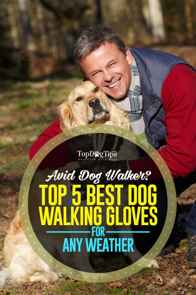 Top Rated Dog Walking Gloves
