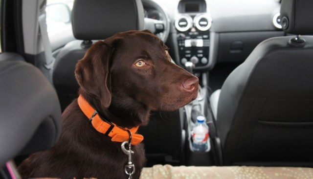 Traveling With Dogs in Cars