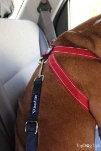 Adjustable Straps of a Crash Tested Dog Harness