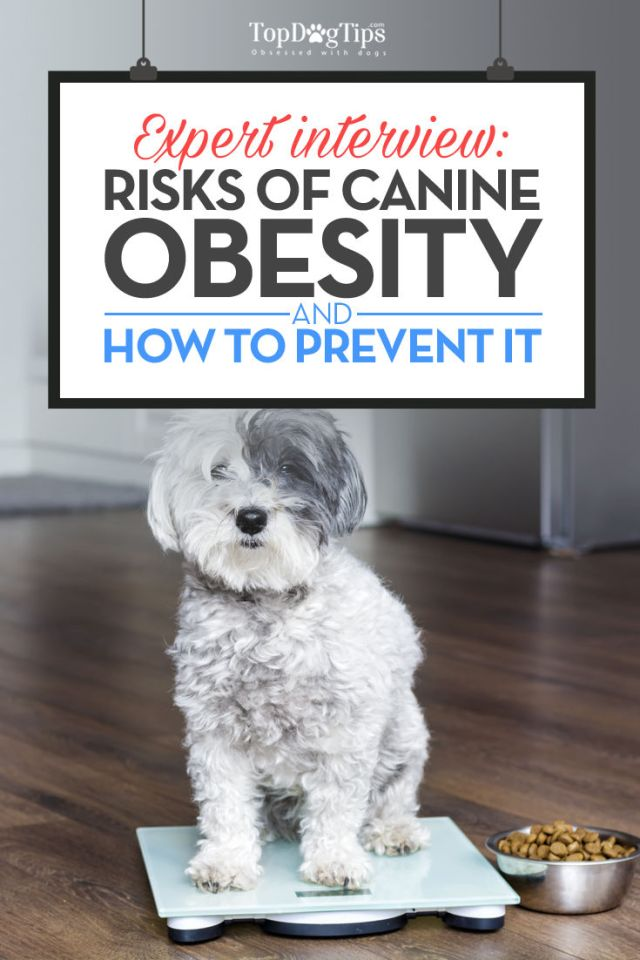 What Are The Risks of Canine Obesity