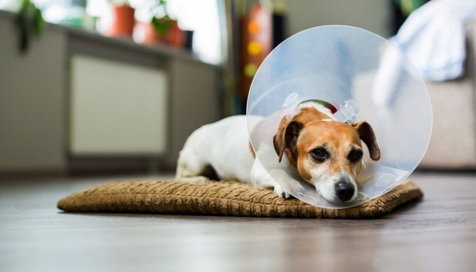 Best Dog Recovery Cones
