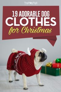 Best Dog Christmas Clothes and Costumes