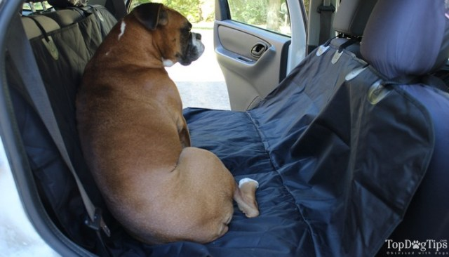 Best Seat Covers for Dogs
