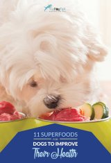 Best Superfoods for Dogs That May Improve Their Health