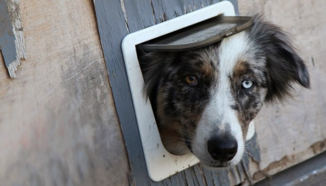How To Install Dog Doors At Home