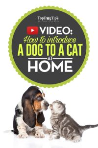 How To Introduce A Dog To A Cat Video