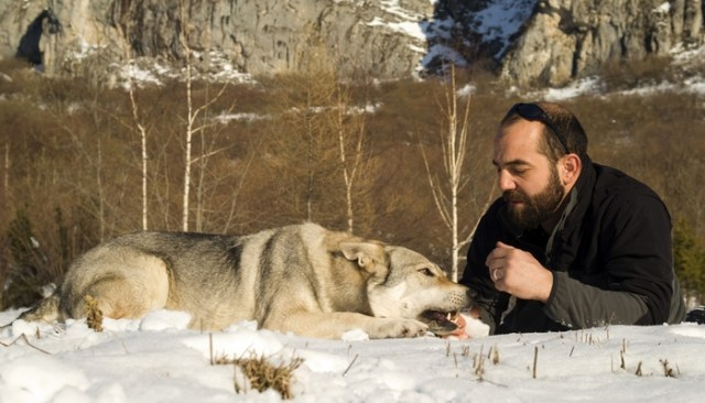 Man Adopts Dog Only to Discover That He's Actually a Wolf