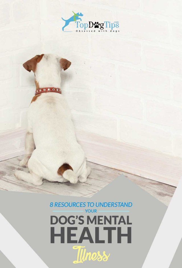 Mental Health Illnesses in Dogs