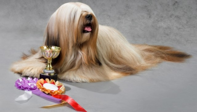 Levels andTypes of Dog Shows