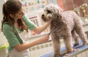 Where To Begin Your Career As A Pet Groomer
