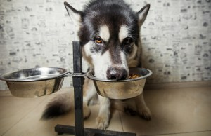 elevated food bowls for dogs