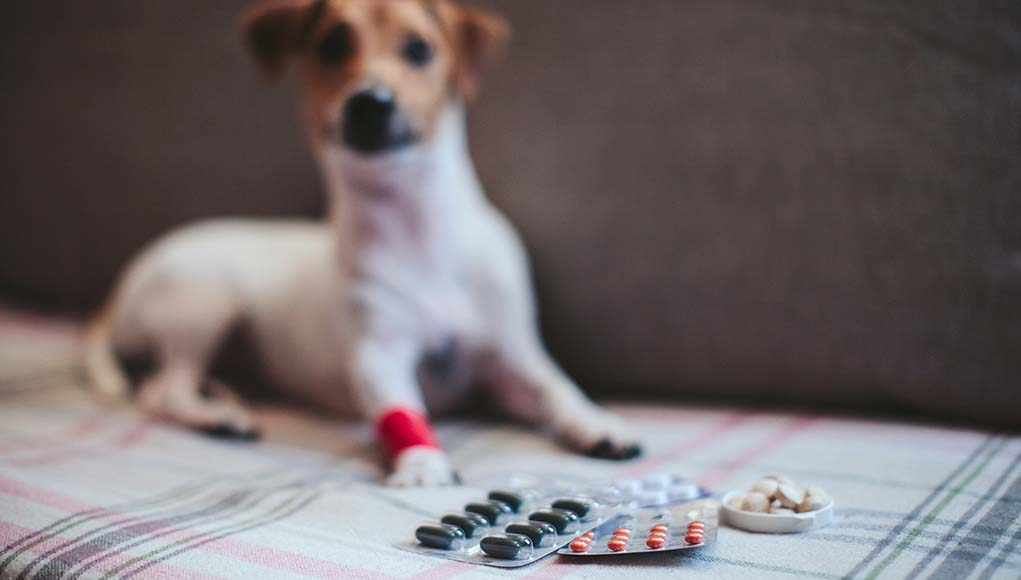 18 Ways to Save Money on Dog Care, Health, Vet Bills and Medicine
