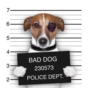 Bad dog shame with dark eye mug shot