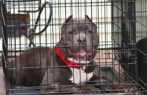 Best Heavy Duty Dog Cages and Indestructible Dog Crates