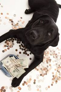 Don't buy expensive dog food but quality