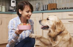 How to Choose the Best Dog Food for Your Dog