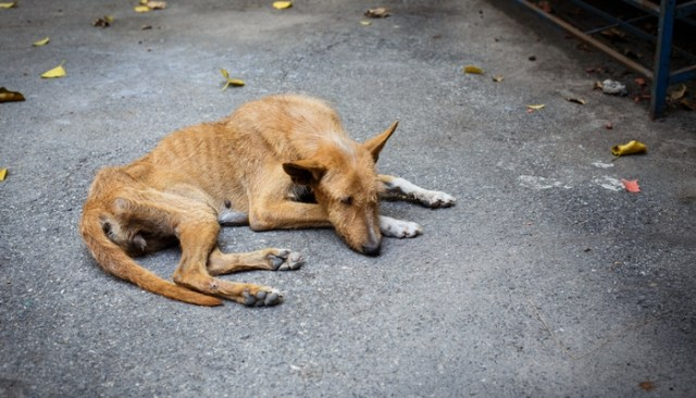 South African Dog Gets Rescued
