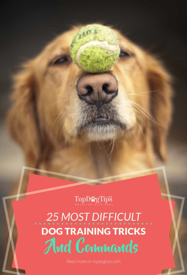 25 Super Difficult Tricks to Train Dogs