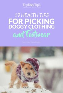 Health Tips for Picking the Best Dog Clothes and Footwear
