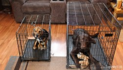 Crate training using the best metal dog crate