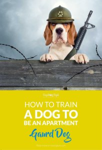 How to Train a Dog to Be an Apartment Guard Dog