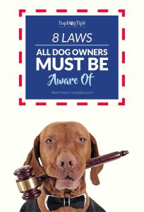 Laws All Dog Owners Should Be Aware Of