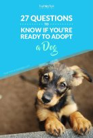 Questions to Ask Yourself to Know If Youre Ready for a Dog