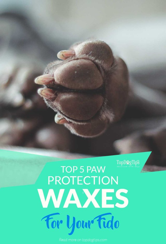 The Best Paw Protection Waxes for Dogs