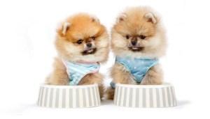 Top Best Cheap Puppy Food Brands