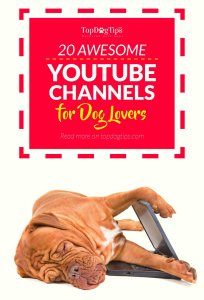 Top Best YouTube Channels for Dog Lovers