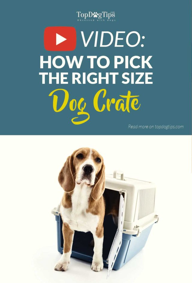 Video on How To Choose the Right Size Dog Crate