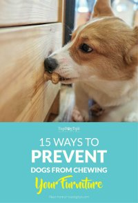 15 Ways to Prevent Dogs from Chewing Furniture and Belongings